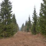 лесосеменного комплекса